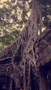 Baum in der Tempelanlage Angkor Wat